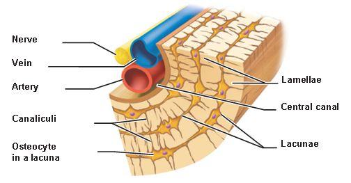 Pin By Nathaforchrist On Nursing Human Anatomy And Physiology Anatomy Anatomy And Physiology
