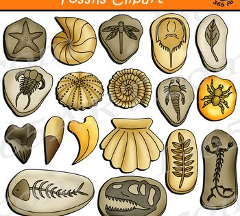 Fossils Clipart Clip Art Fossils Art Assignments
