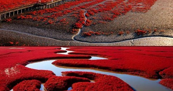 The red beaches of Panjin China are just a coastal wonder of