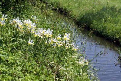 Choosing Plants For River Banks Tips For Planting Along River Banks River Bank Landscape Design Plants