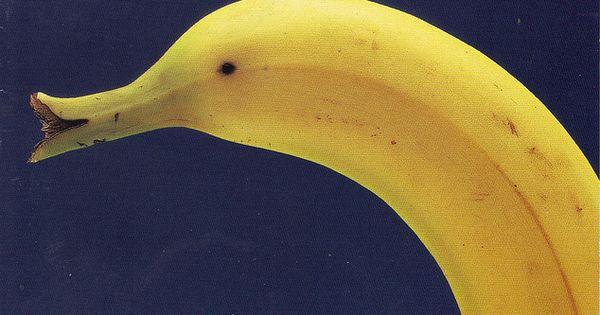 Banana Duck FoodArt