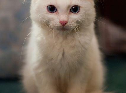 Cat - Barney.