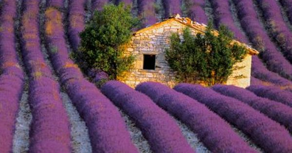 Lavender Fields, South of France- lavender is one of my favourite flowers