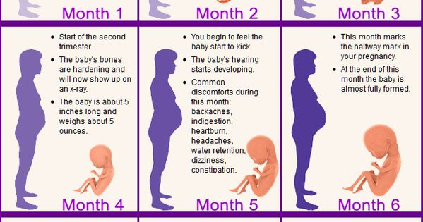 pregnancy week by week | Pregnancy | Pinterest | Pregnancy ...