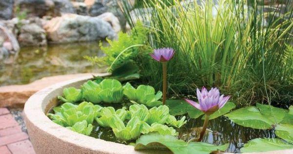 Jardin aquatique en pot -une petite oasis à mettre au balcon ...