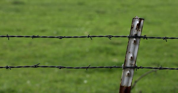Wire Fence Google Search Wire Fence Barbed Wire Fencing Chain Link Fence