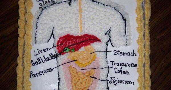 Digestive System Cake Cakes Pinterest Cakes