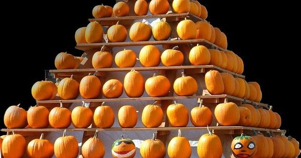 How Many Days Until Halloween Countdown How Many Days Till Halloween Australia How Many Days Ar Days Until Halloween Pumpkin Thanksgiving Halloween Countdown