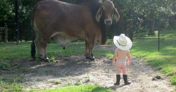 Little boy and Cow