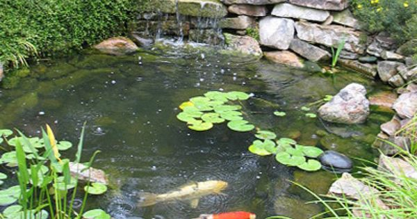 17 Best ideas about Koi Pond Supplies on Pinterest Koi Koi fish