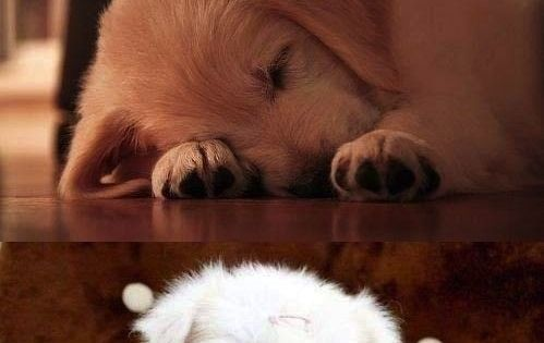 I love animal,i would take all of them,so cute!!!!!! We will add