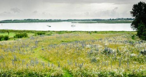 Making Meadows Landscape Design Meadow Garden Design