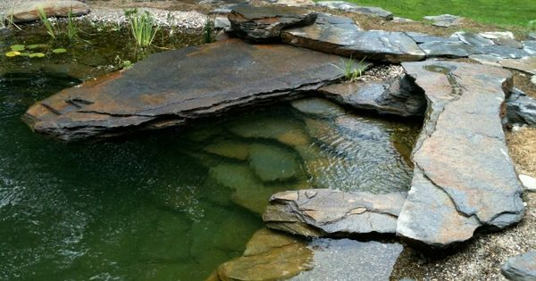 Natural Swimming Pool Project Page Water House Pools Natural Swimming Pools Pool Landscaping Natural Pool