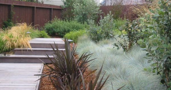 Dry Garden With Grasses, Clipped Shrubs, Windswept Trees, Open