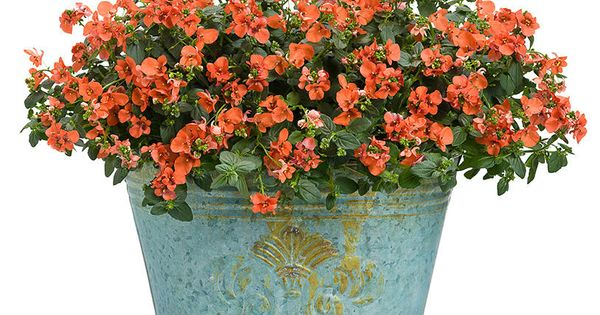 Colorful containers p allen smith i come to the garden pinterest planters plants and - P allen smith container gardens ...