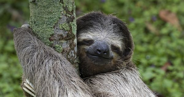 The grinning sloth [1920 x 1080] | wallpapers | Pinterest ...