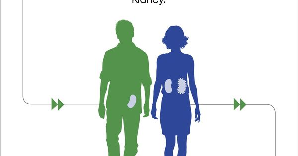 Learn about participating in an organ donation chain. | Infographics ...