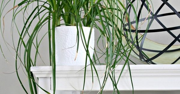 Plants that are easy to keep alive and are safe to have for Easy houseplants safe for pets