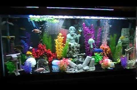 Atlantis Fish Tank Fish Tank Aquarium Decorations Aquarium Design