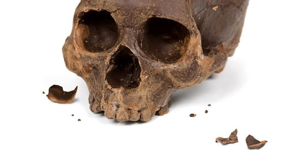 Wow. Chocolate skulls, cast from real human skulls. Not sure what to
