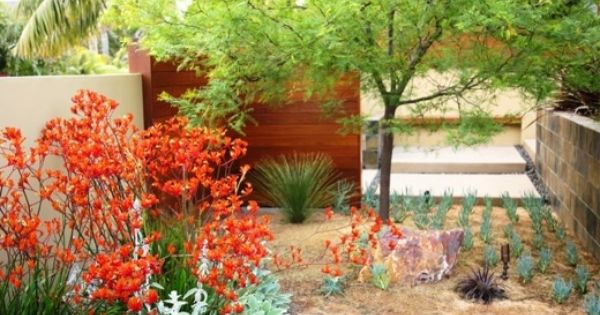 Garden ideas landscape ideas drought tolerant full sun for Low maintenance full sun flowers