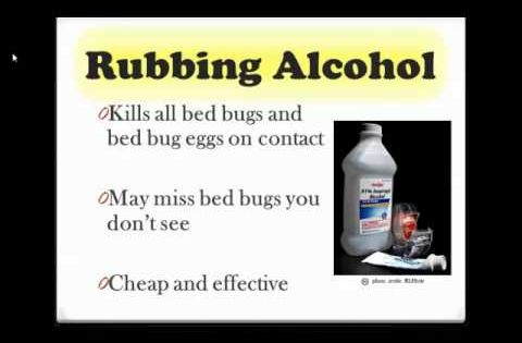 What Really Works To Get Rid Of Bed Bugs