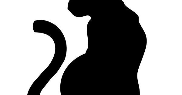 pochoir chat 2 noir et blanc plastique dingue pinterest balayage ombr et lecture. Black Bedroom Furniture Sets. Home Design Ideas
