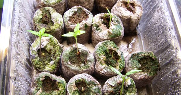 4 most common seedling issues and how to deal with them