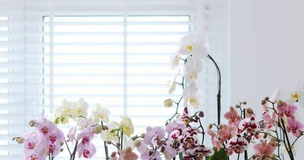 Les fleurs d int rieur les orchid es en 40 images orchid es blanches les orchid es et orchid es - Arrosage orchidee d interieur ...