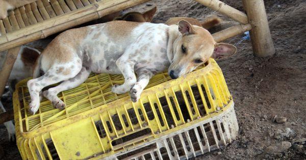 animal welfare thesis