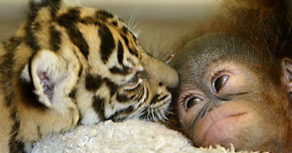 More cute baby animal pictures! cute baby Animals Baby Animals| http://cutebabyanimalsgallery796.blogspot.com