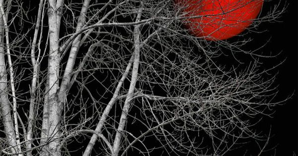 Large Matted Black And White Tree Red Moon By