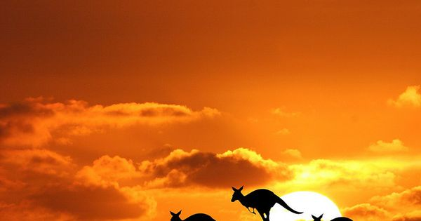 Kangaroo sunset in Australia Photo taken by John Dalkin Heaven`s Gate. Taken