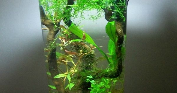 Miniature aquascape aquariums pinterest bocal for Bocal poisson acheter