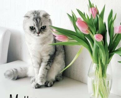 Bkh Blh Kitten In Nordrhein Westfalen Kierspe Britisch Kurzhaar Katzenbabys Kaufen Ebay Kleinanzeigen Katzenbabys Katzen Katzenbabys Kaufen