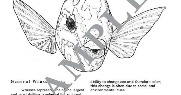 hawaiian coral reef coloring pages - photo#5