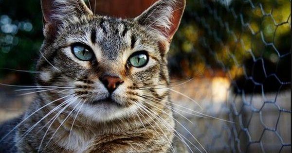 Https Beautyy Org قمة الابداع صور قطط احلي صور نونو بساس Https Beautyy Org Beautiful Dogs Dog Cat Cats