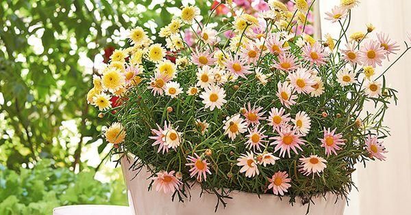 La beaut des petites fleurs anth mis couleur for Asperge plante interieur