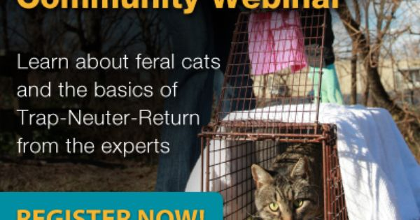 Learn The Basics Of Trap Neuter Return With Our New Helping Cats