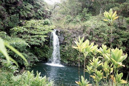 9a0750373d9ba2d7841644ea824139c6 - Hana Maui Botanical Gardens Hana Hi