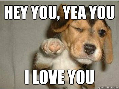 Hey You Yea You I Love You Puppies Funny Funny Animal Memes Funny Animals
