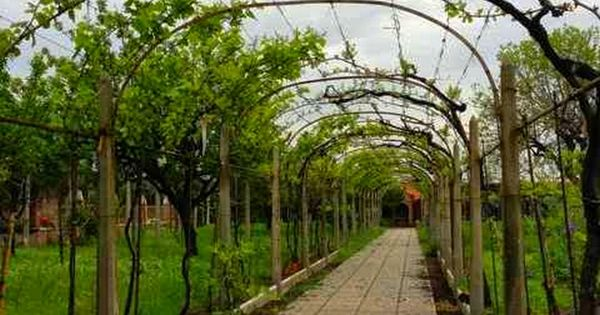 tunnel avec vigne faire une pergola ou une treille avec vignes pinterest. Black Bedroom Furniture Sets. Home Design Ideas