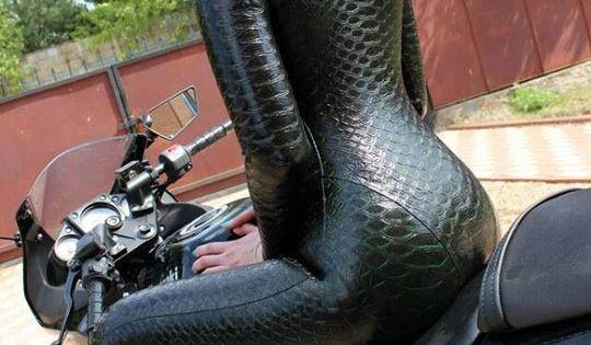 Behold The Anaconda Suit Anaconda