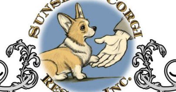 Sunshine Corgi Rescue Fl Corgi Rescue Dog Love Dog Personality