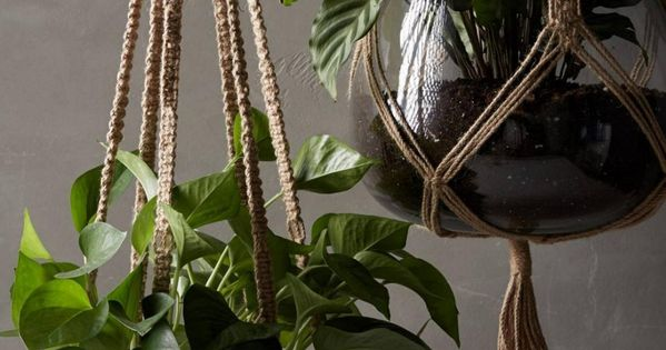 Idee Suspensions Macrame Plantes Vertes Decoration Roselia Garden 4 Interiors Pinterest