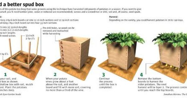 Potato Box Yields Scads Of Spuds Potato Box Potato Gardening Potato Planters
