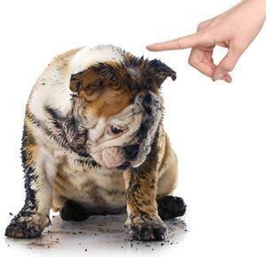 Tips For Solving Common Behavior Problems Dog Behavior Dog