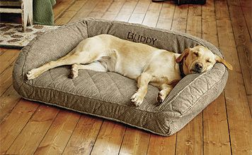Orvia Memory Foam Bolster Dog Bed 219 Yikes Hmm Looks Comfy Though With Images Dog Pet Beds Dog Bed Memory Foam Dog Bed