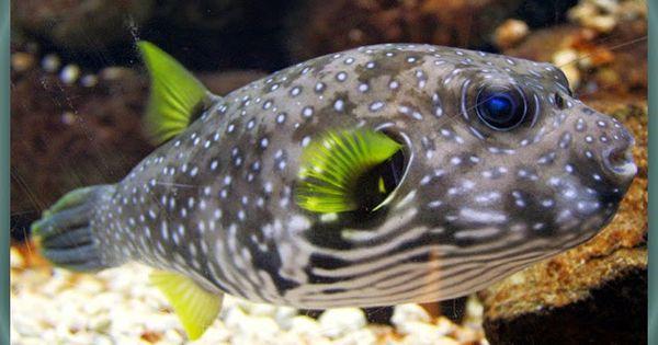 Nama Binatang Dari Huruf B Nama Gambar Binatang Akuarium Air Asin Ikan Akuarium Binatang