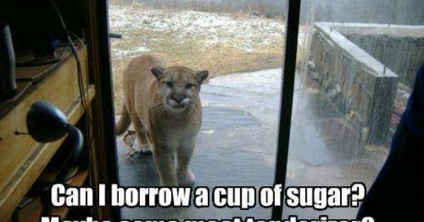 hi im you neybor down da mountain can i borrow a cup